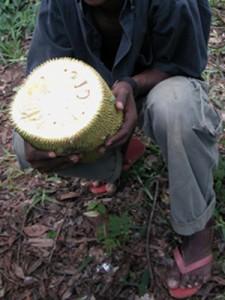 Ebun jackfruit